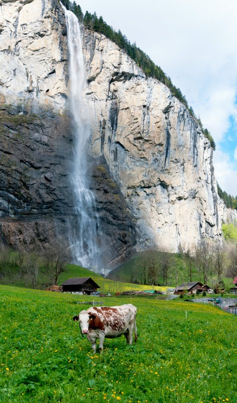 cow and waterfall on a green meadow in Lauterbrunnen водопад и корова на зеленом лугу в Лаутербруннене автор фото Демидов Игорь