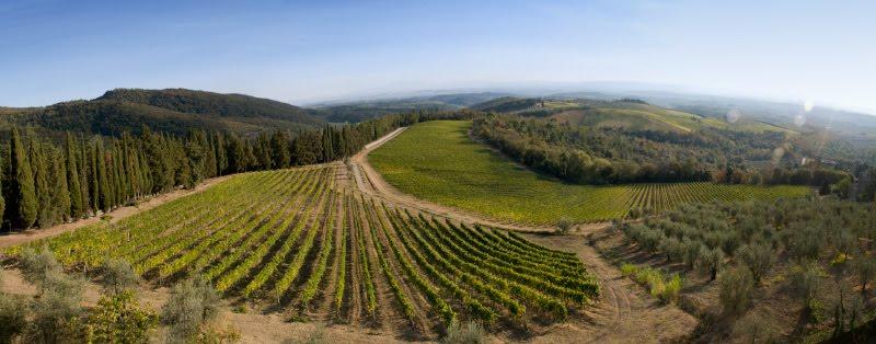 Castello di Brolio panorama tuscny chianti italy field wine yards olive trees панорама вид из замка Бролио Тоскана Кьянти Италия автор Демидов Игорь виноградники и оливковые деревья