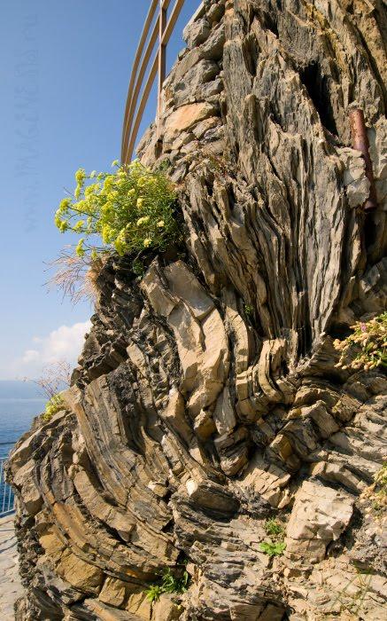 Скрученные скалы и цветы twisted rocks and flowers автор Демидов Игорь