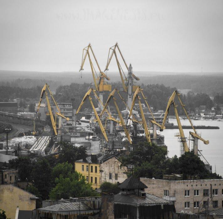 jiraf herd port crane стадо жирафов подъемный кран порт Выборга автор Демидов Игорь