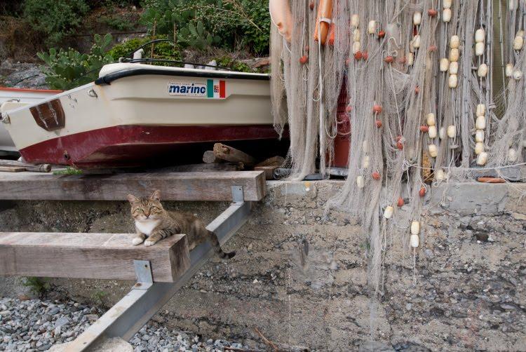 кот рыбак снасти сети лодка автор Демидов Игорь fisherman cat boat tackle fish net