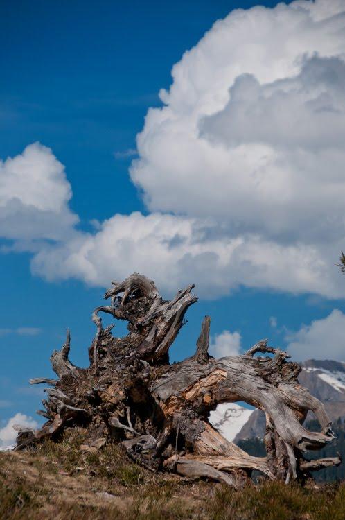 Коряга корни сухое дерево вершина горы альпы автор фото Демидов Игорь snag old dead tree alp mountains