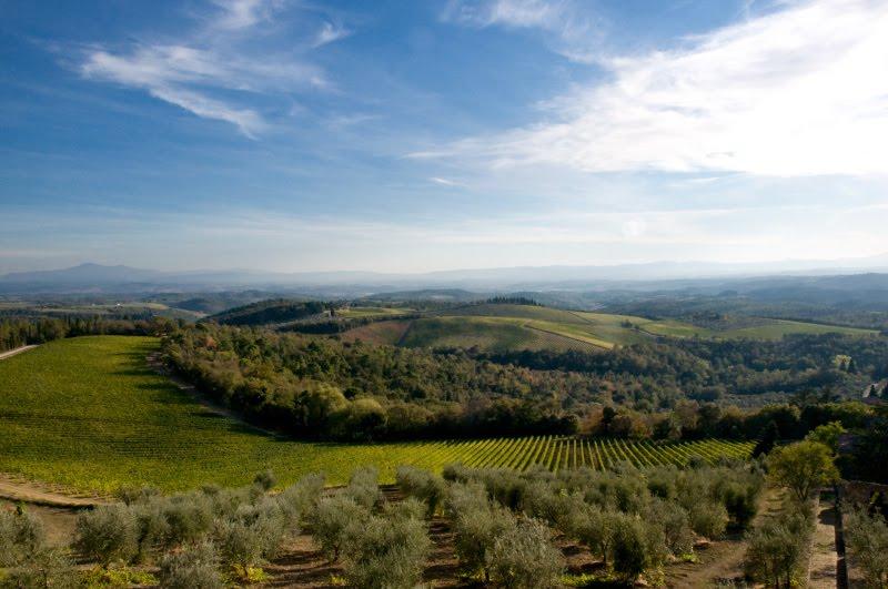 оливковая роща виноградник Тоскана на закате автор Демидов Игорь Tuscany chianti vineyard olive trees sunset