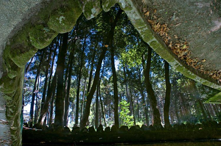 Лес деревья отражение пруд мох вода Синтра Пена парк автор Демидов Игорь Sintra Pena park trees in water mirror moss on the rocks