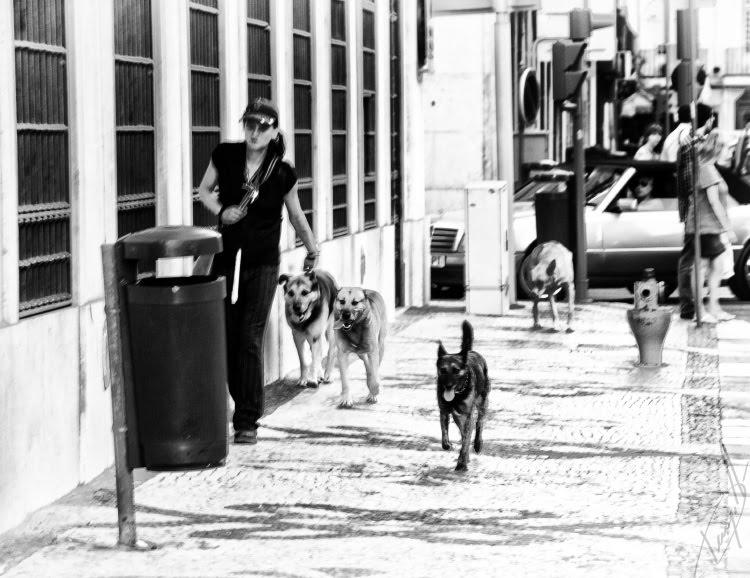 Lisbon dogs walking down the street собаки идут по мостовой Лиссабона автор Демидов Игорь