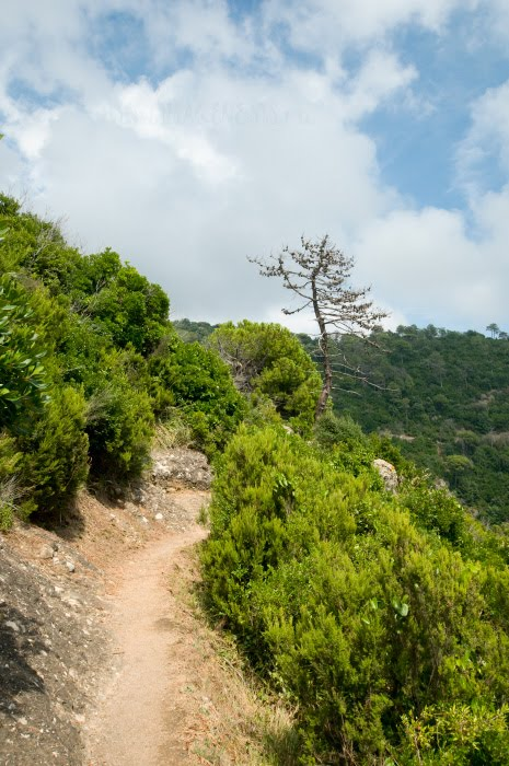 сосна тропа горы Портофино Сан Фруттозо автор Демидов Игорь Portofino San Fruttoso mountain path dead pine cliffs