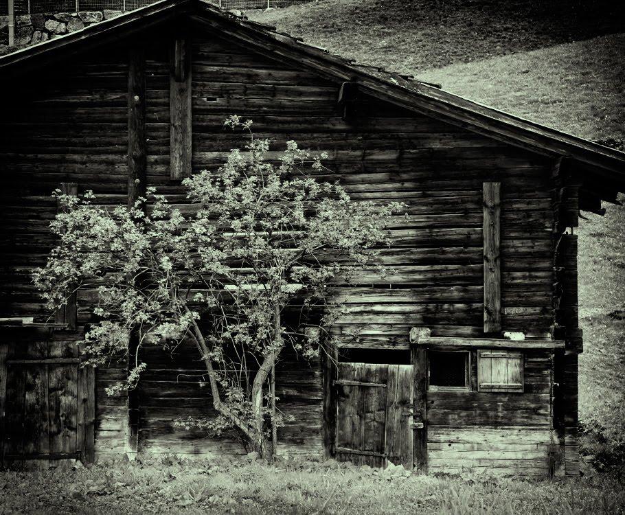 хибара изба деревянная дерево лачуга автор фото Демидов Игорь shanty  and tree