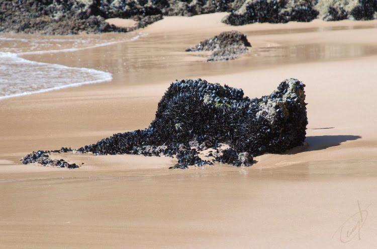 морское чудище зверь ледит на пляже ракушки на камне автор демидов игорь sea creature shells on rock
